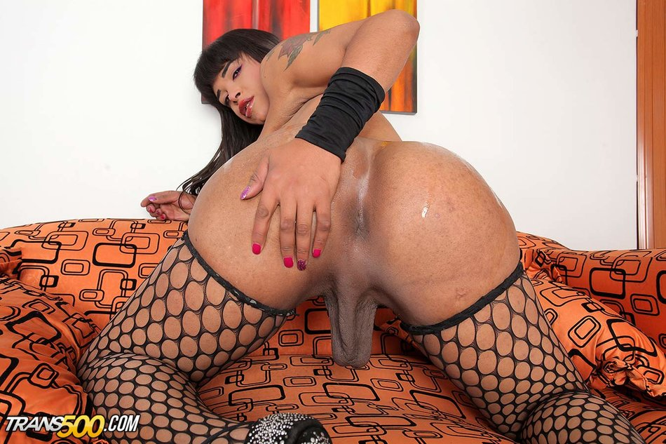 Bbw Shemale Porn Pictures
